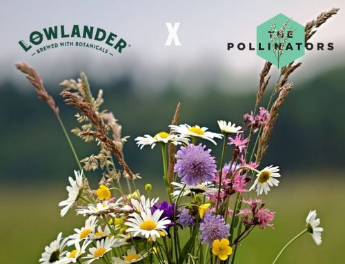 Lowlander joins The Pollinators to support biodiversity