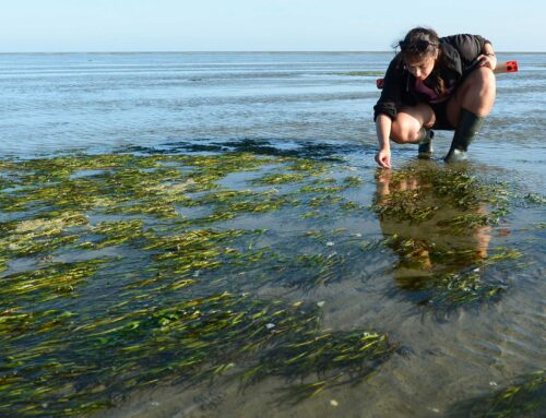 From drinking beer, to planting seagrass